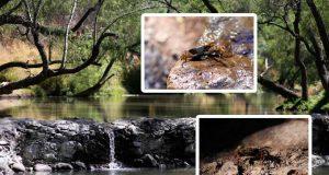 Río El Pueblito, ejemplo de compromiso con el medio ambiente en Corregidora